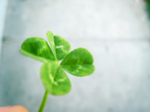 Four leaf clover desktop